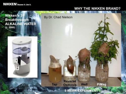 nikken_waterfall_plants_5week_chadnelson.jpg