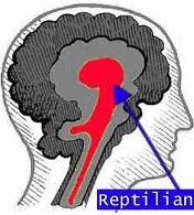 reptilian-brain.jpg